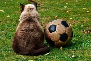 Праздник футбола организовали в детском саду